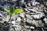Emergency Pepper Builds Underground Home for Under $50